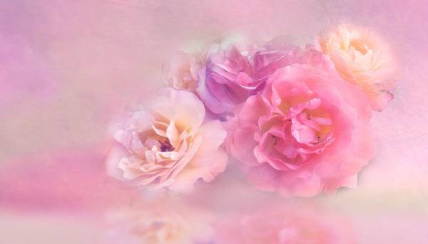 Painting - Dreamy Pastel Roses by Shabby Chic and Vintage Art