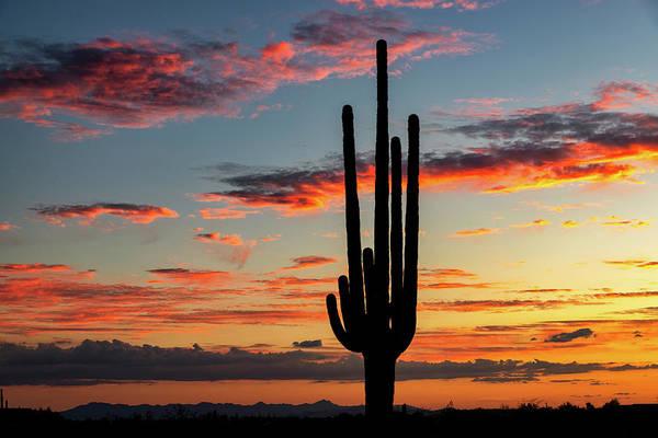 Wall Art - Photograph - Dreamy Saguaro Silhouette Sunset  by Saija Lehtonen