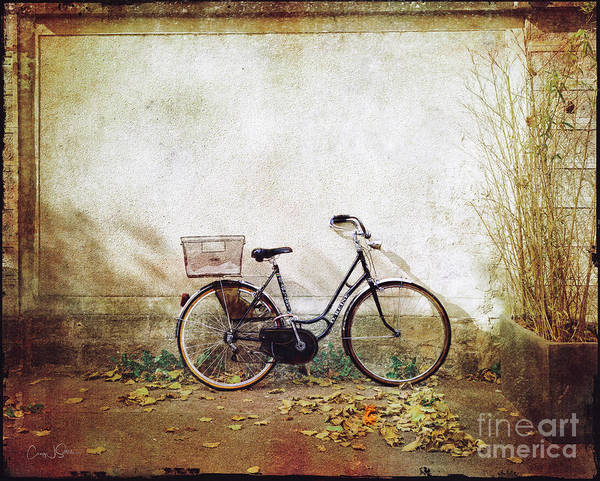 Photograph - D.renie Bicycle Of Fontainebleau, France by Craig J Satterlee