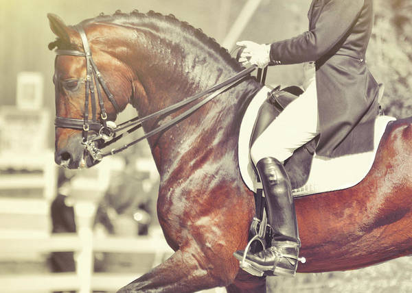 Photograph - Dressage Best  by JAMART Photography
