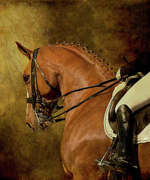 Texture Photograph - Dressage Horse And Rider by Melinda Moore