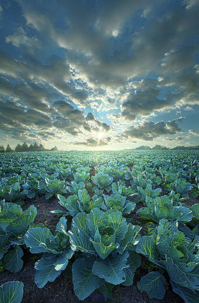 Wall Art - Photograph - Dressed Up In Green by Phil Koch