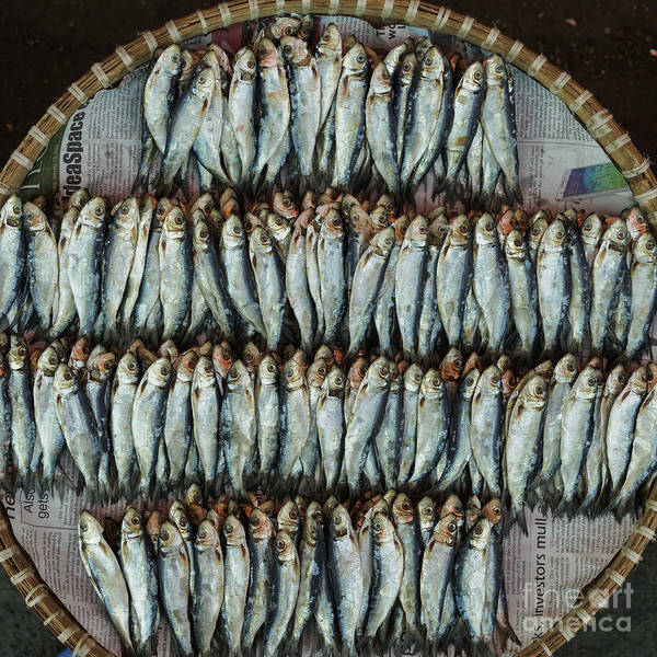 Philippines Photograph - Dried Fish, Or Tuyo, On A Wicker Basket by David Guyler
