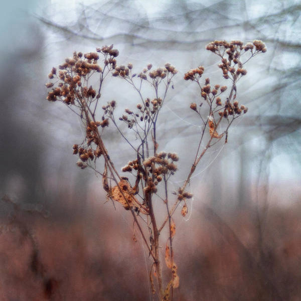 Wall Art - Photograph - Dried Flowers by Tammy Harding