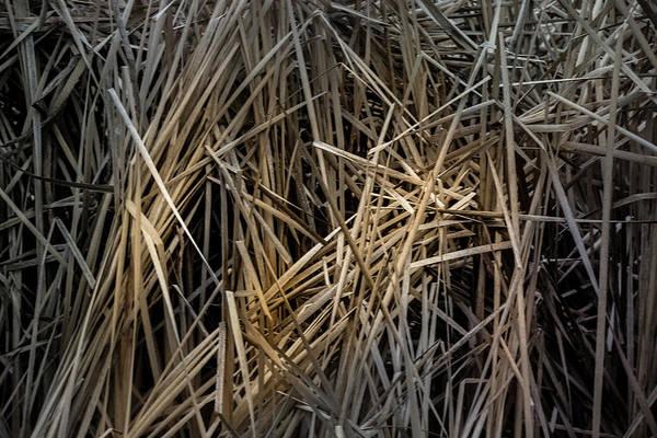 Photograph - Dried Wild Grass IIi by Juan Contreras