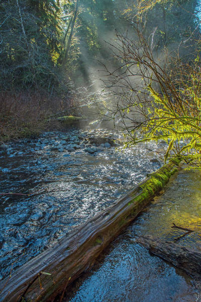 Photograph - Drift Creek Mist by Matthew Irvin