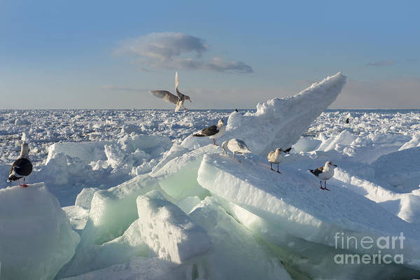Wall Art - Photograph - Drift Ice In Shiretoko, Hokkaido, Japan by Zincreative