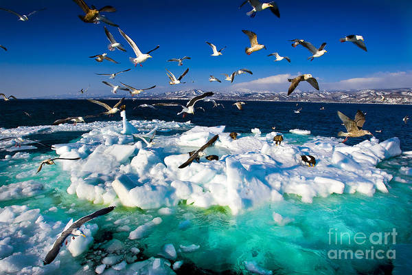 Wall Art - Photograph - Drift Ice by Kei Shooting