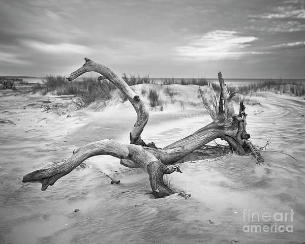 Photograph - Drift by Patrick M Lynch