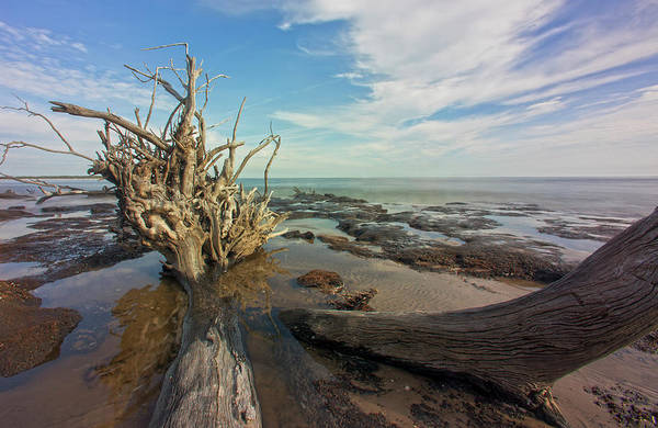 Photograph - Drift Wood Beach by Robert Och