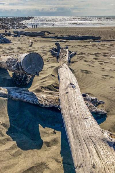 Photograph - Drift Wood On The Beach by Tatiana Travelways