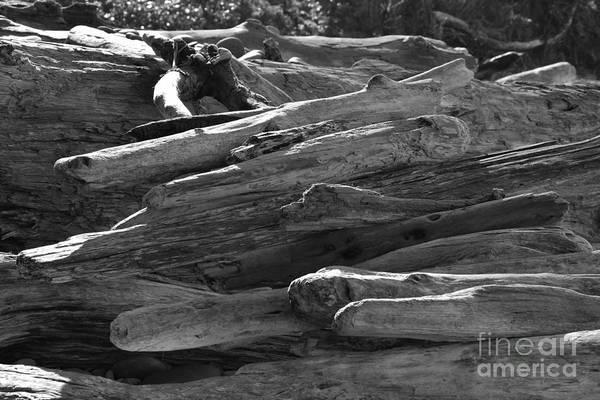 Photograph - Drifted Wood by Jeni Gray