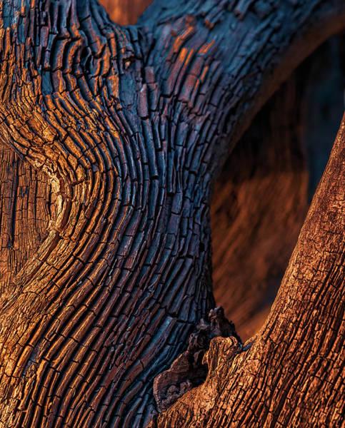 Photograph - Driftwood At Sunset by Robert FERD Frank