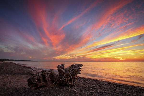 Photograph - Driftwood  by Emmanuel Panagiotakis