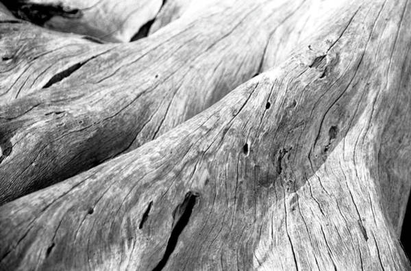 Georgia Photograph - Driftwood, Jekyll Island, Georgia by Jason Quick