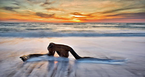 Photograph - Driftwood by Leland D Howard