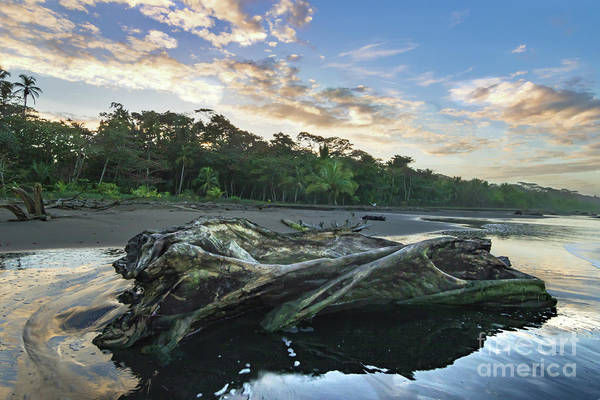 Cahuita Photograph - Driftwood by Norma Brandsberg