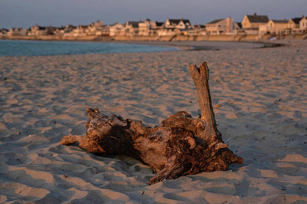 Photograph - Driftwood On Green Harbor Beach Marshfield Ma by Toby McGuire