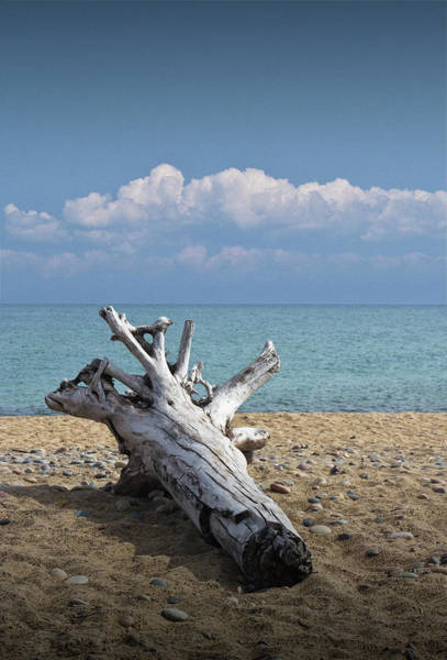 Photograph - Driftwood On The Beach At Whitefish Point In Michigan's Upper Peninsula by Randall Nyhof