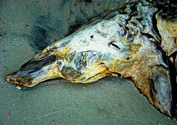 Photograph - Driftwood 'skull' by Bill Jonscher