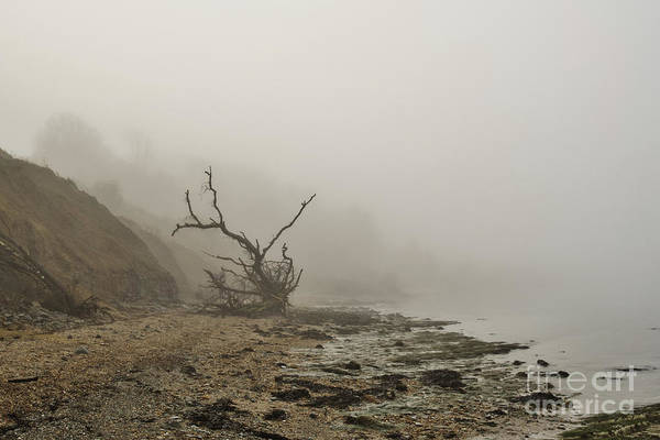 Photograph - Driftwood Tree In Thick Fog by Clayton Bastiani