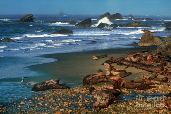 Photograph - Drifwood And Sea Stacks Harris Beach State Park Oregon. by Dave Welling