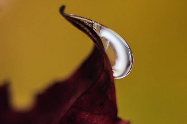 Photograph - Drop On A Wine Leaf 3 by Wolfgang Stocker
