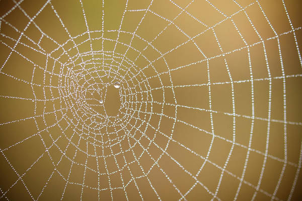 Pay Photograph - Drops Of Dew In Spiders Web by Sylvain Masson