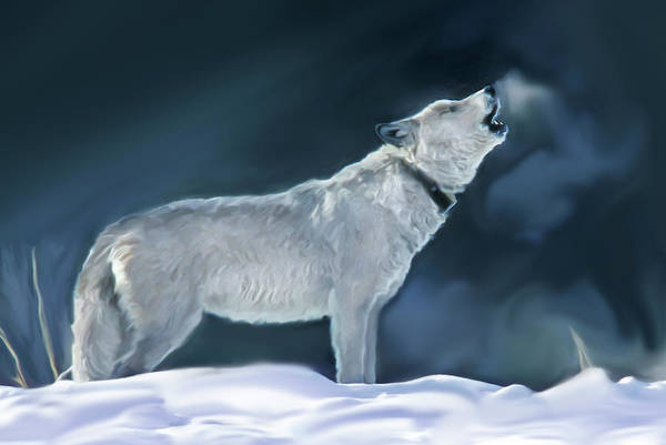 Photograph - Druid Peak Pack Wolf 42f Howling by Mark Miller