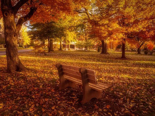 Photograph - Drury Autumn Color by Allin Sorenson