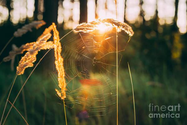 Wall Art - Photograph - Dry Green Grass Field In Sunset by Grisha Bruev