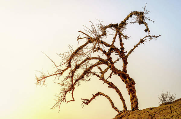 Wall Art - Photograph - Dry Tree In A Desert by Alexey Stiop
