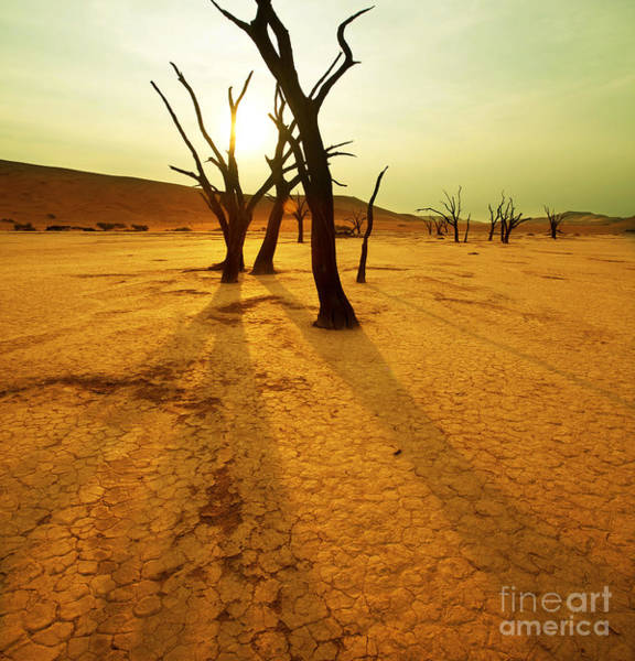 Arid Climate Wall Art - Photograph - Dry Trees In Namib Desert by Galyna Andrushko