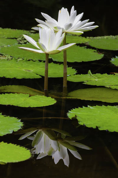 Photograph - Dual Reflection by Dawn Currie