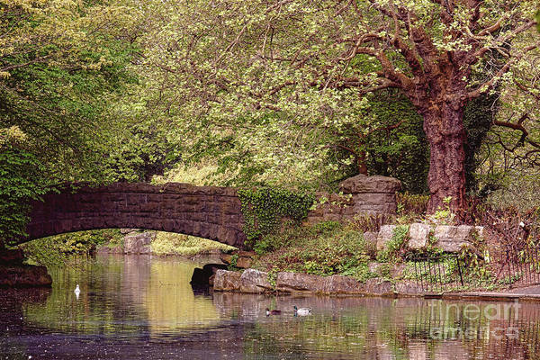 Wall Art - Photograph - Dublin St Stephen Green Stone Bridge by Olivier Le Queinec