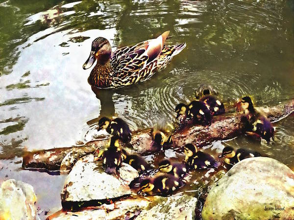 Photograph - Duck Family by Susan Savad