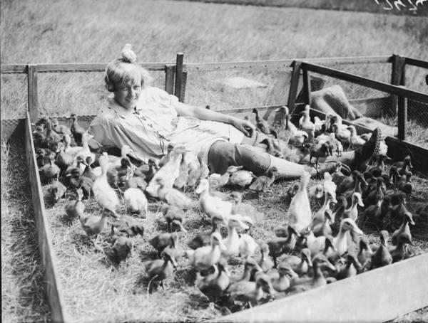 Birdcage Photograph - Duck Farm by Fox Photos