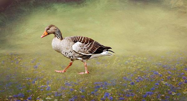 Wall Art - Mixed Media - Duck Gear by Heike Hultsch