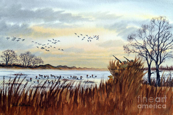 Wall Art - Painting - Duck Hunting Season Begins For Canvasback by Bill Holkham