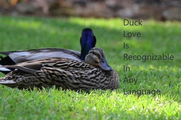 Photograph - Duck Love by Lisa Wooten