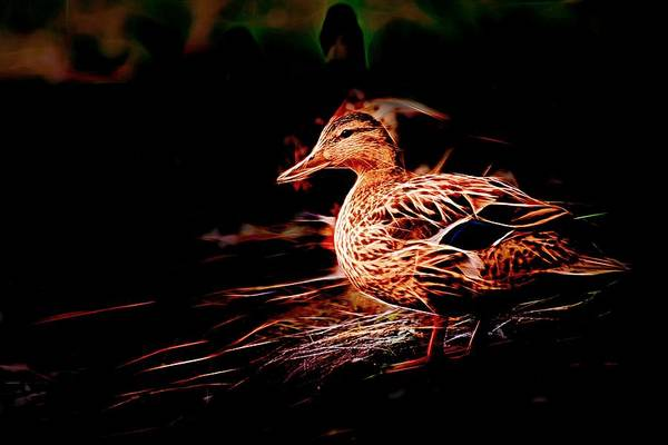 Photograph - Duck On Shore Night by Don Northup