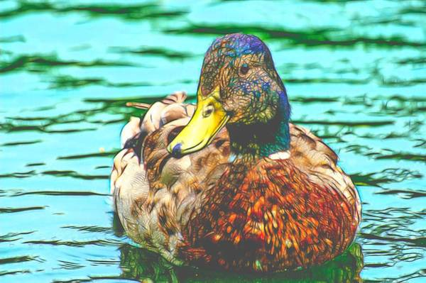 Photograph - Duck Swimming In Lake Cool Paint by Don Northup