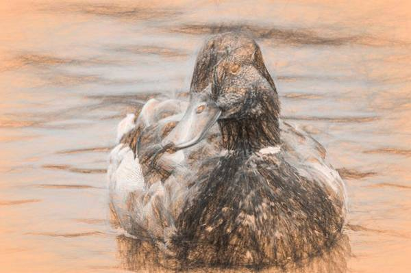 Photograph - Duck Swimming In Lake Da Vinci by Don Northup