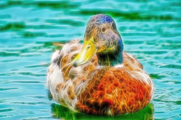 Photograph - Duck Swimming In Lake Fibers by Don Northup