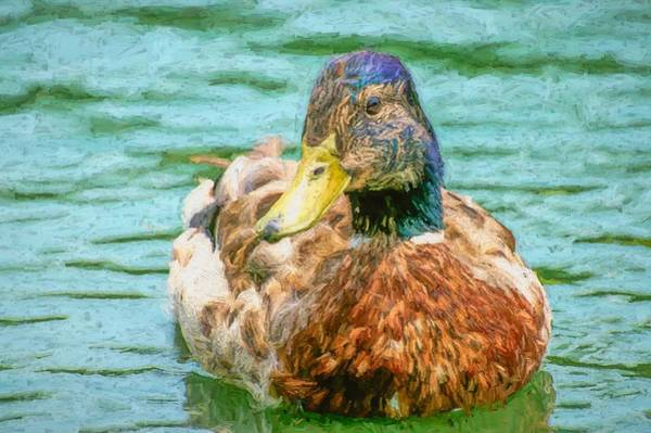 Photograph - Duck Swimming In Lake Hopper by Don Northup
