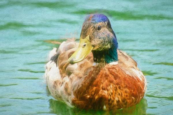 Photograph - Duck Swimming In Lake Painted by Don Northup