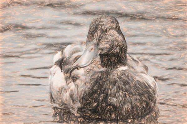 Photograph - Duck Swimming In Lake Sketch by Don Northup