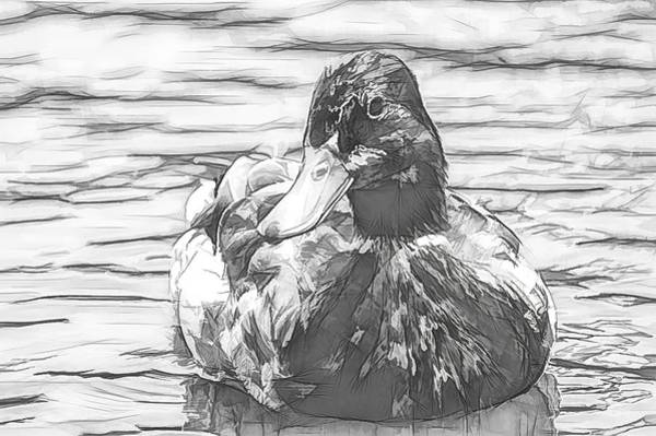 Photograph - Duck Swimming In Lake Sketchy by Don Northup