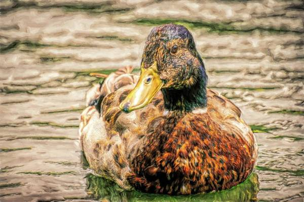 Photograph - Duck Swimming In Lake Toned by Don Northup