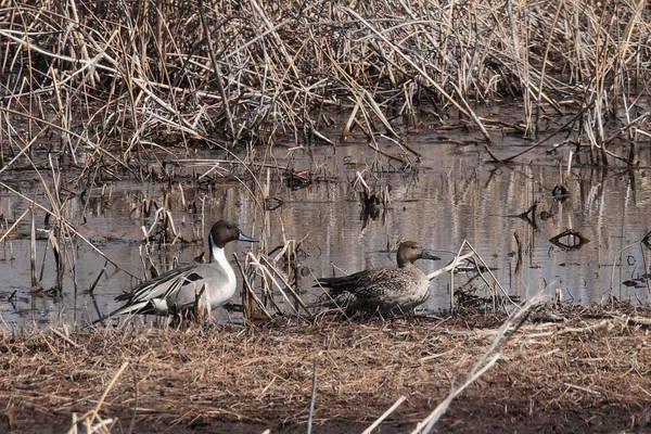Photograph - Ducks 6238 by John Moyer